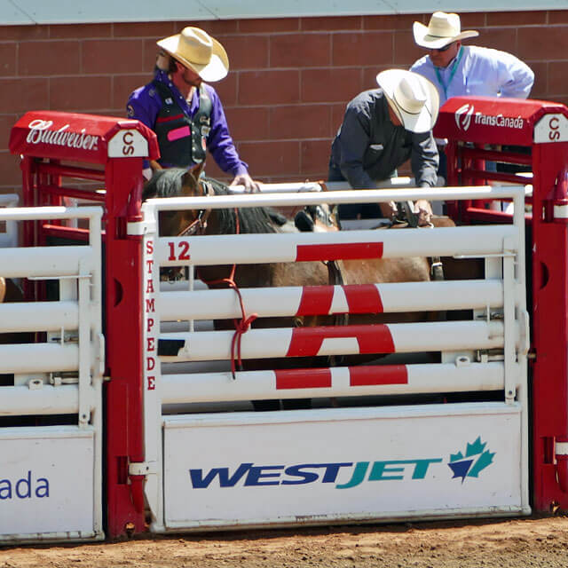 Calgary Stampede im Grandstand